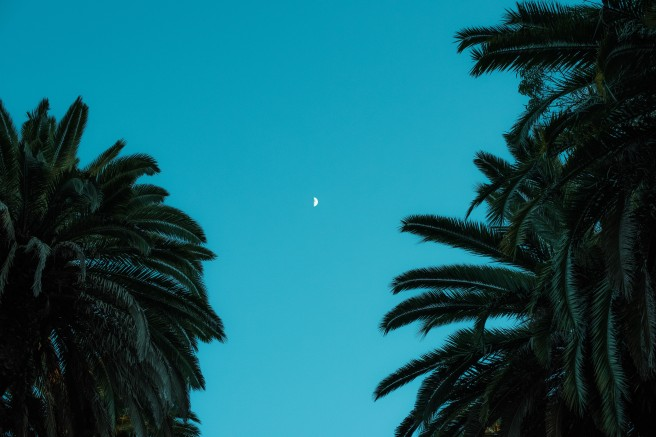palmeira2-1