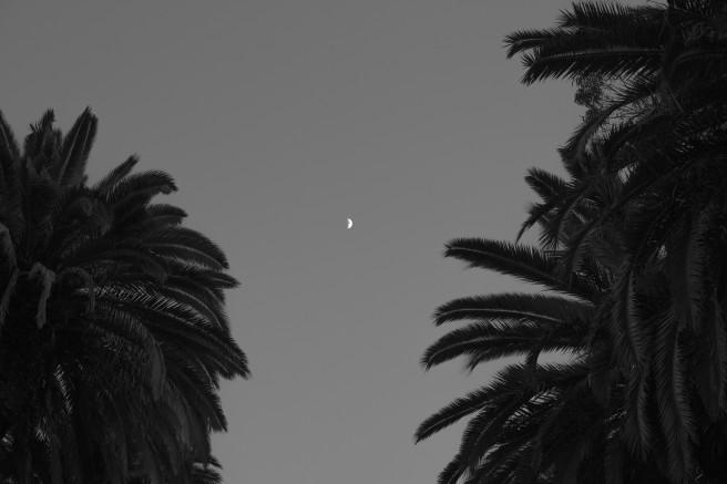 palmeira4-1